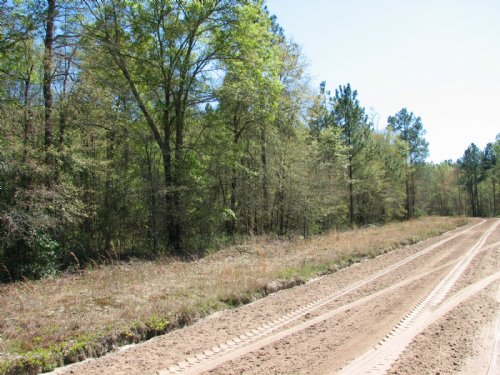 22 +/- Acres Bryant Still Rd. : Brooklet : Bulloch County : Georgia