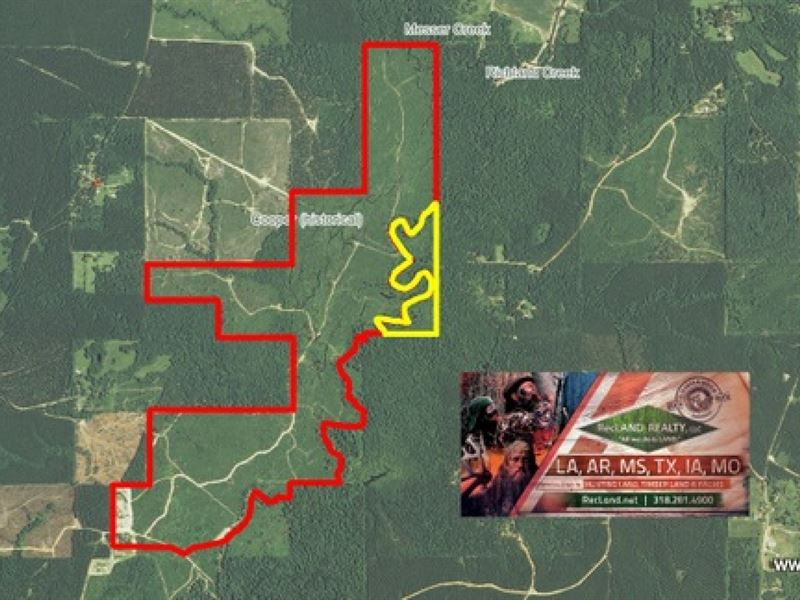 510 Ac - Hunting Tract Along Castor : Grayson : Caldwell Parish : Louisiana