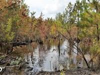 Hidden Recreational Investment Prop : Stedman : Cumberland County : North Carolina