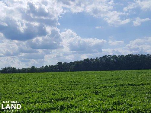Premium Farmland Beautiful Homesite : Wallace : Pender County : North Carolina