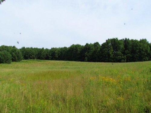 95 Acres Hunting Land Near Afton : Coventry : Chenango County : New York