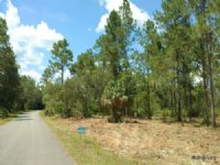 1 Acres In Ne Marion County, Fl : Fort Mc Coy : Marion County : Florida