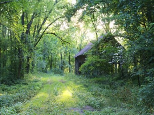 34 Ac - Perfect Wooded Sanctuary : Oregon : Dane County : Wisconsin