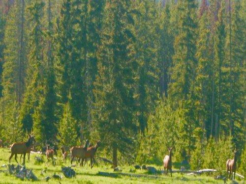 Local's Secret : Anaconda : Deer Lodge County : Montana