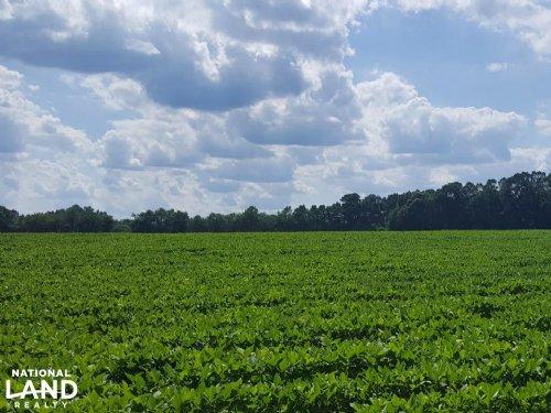 Wallace Prime Productive Farmland : Wallace : Pender County : North Carolina