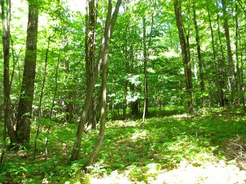 76 Acres Hunting Land Financing : Richford : Tioga County : New York