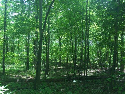 Taylor Mountain Road 2 : Stanardsville : Greene County : Virginia
