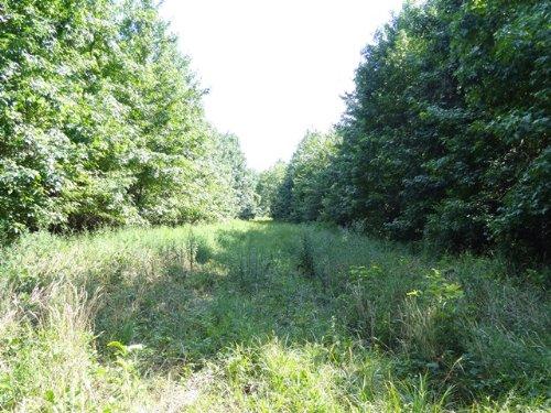 Reduced 55 Ml Acres On Hwy 236 : Lonoke County : Arkansas