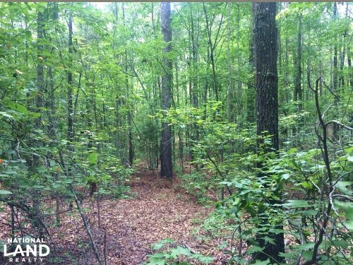 Brookwood Timber Investment & Hunti : Brookwood : Jefferson County : Alabama