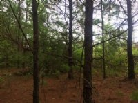 8.98 Acres - Hwy 6 S. Lake Drive : Lexington : Lexington County : South Carolina