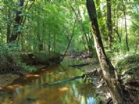 Affordable Land On Slaughter Creek : Preston : Webster County : Georgia