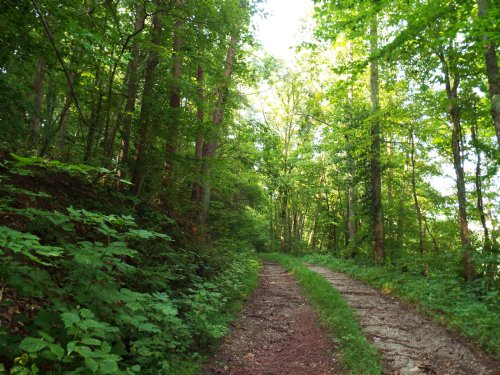 239 Acres Of Woods And Pasture : Rockwood : Roane County : Tennessee