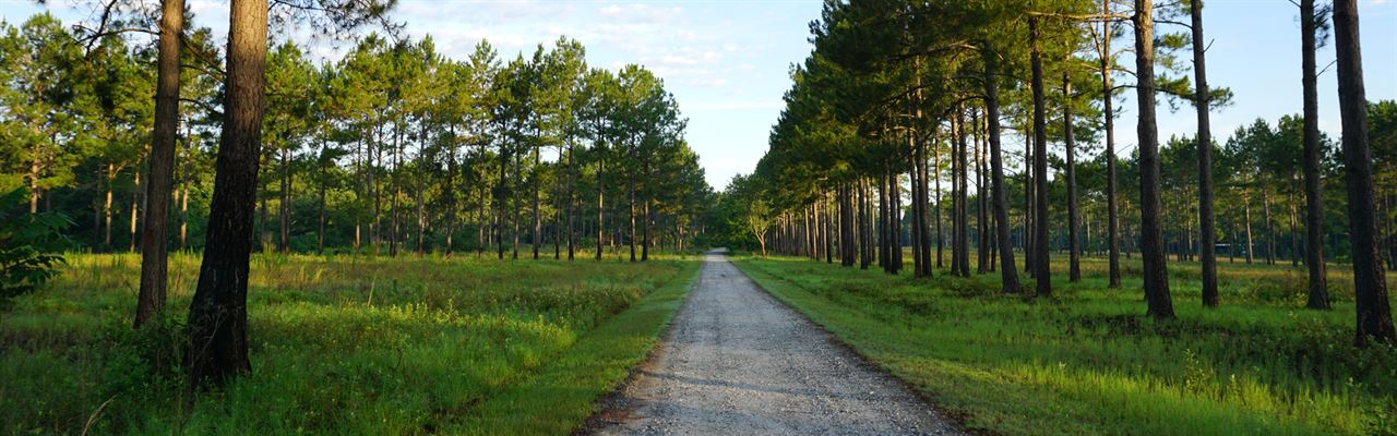 Whispering Pines Plantation