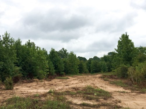 41 Acres Off Cr 336 : Nacogdoches : Texas