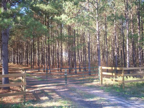 Recreation and Timber Investment : Bainbridge : Seminole County : Georgia