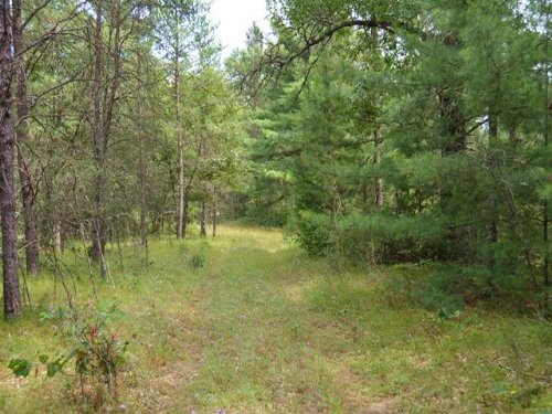 Buildable Acreage For Hunting Camp : Friendship : Adams County : Wisconsin