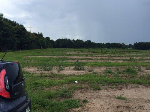 Berkley Ranch - 43.5 Acres : Auburndale : Polk County : Florida