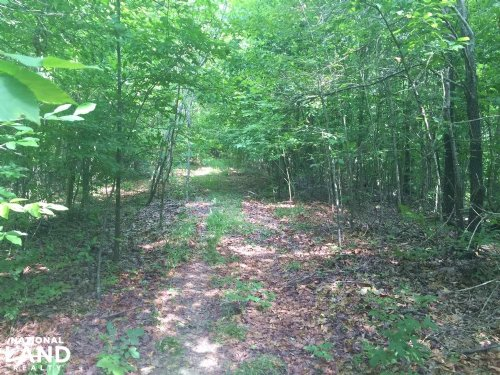 40 Acre Crowley's Ridge Timberland : Forrest City : Saint Francis County : Arkansas