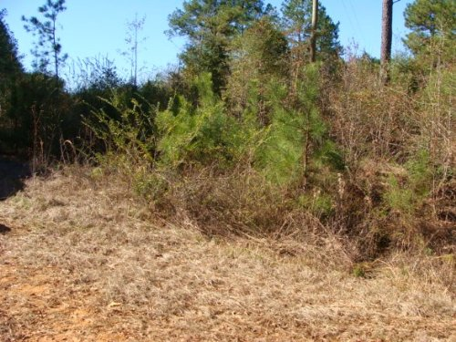 3.34± Ac Lot : Ruth : Pike County : Mississippi