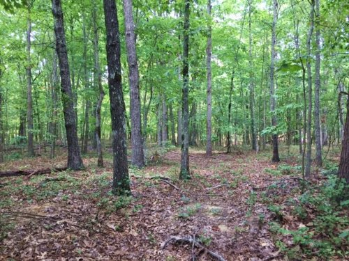 43.95+/- Acres Wooded With Views : Sewanee : Marion County : Tennessee