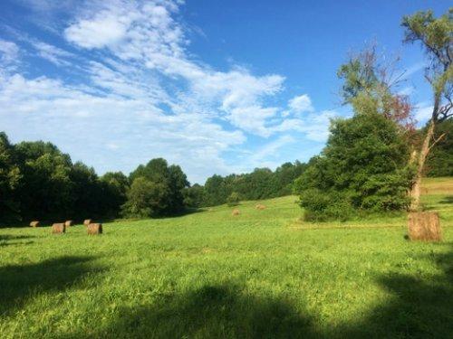 39.14 Acres : Magnolia : Hart County : Kentucky