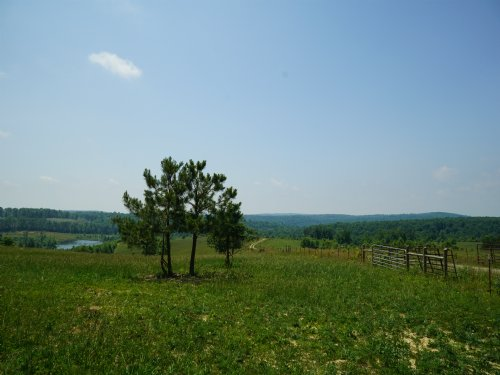 Unrestricted Pasture Land : Grandview : Rhea County : Tennessee