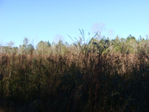 3.93± Ac Lot : Ruth : Pike County : Mississippi
