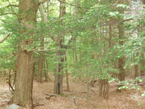 Biddeford Hidden Gem : Biddeford : York County : Maine
