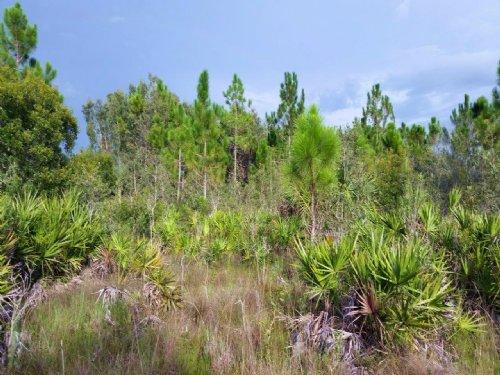 Us 41 Frontage : Punta Gorda : Charlotte County : Florida