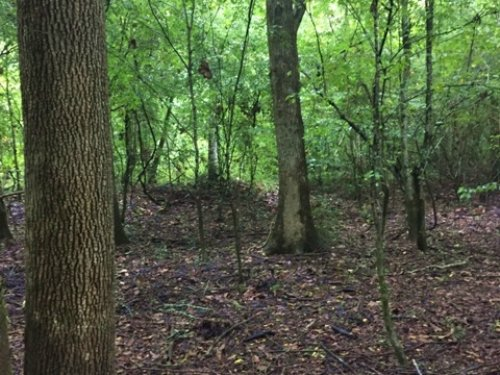 30 Acres Of Hunting Land For Sale : Scooba : Kemper County : Mississippi