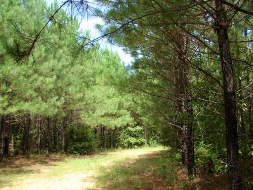 Auburn Hunting, Timber, Home Land : Auburn : Lee County : Alabama
