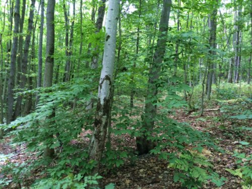 21 Acres Hunting Land Near Forest : Urbana : Steuben County : New York