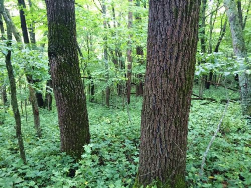 Land To Hunt, Camp 24 Acres : Boscobel : Crawford County : Wisconsin