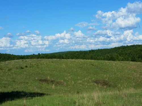 40 Acres Pastureland : Cragford : Clay County : Alabama