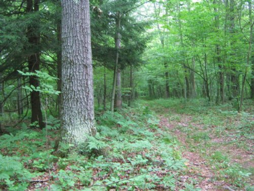 66 Acres Hunting Land Near Ithaca : Dryden : Tompkins County : New York