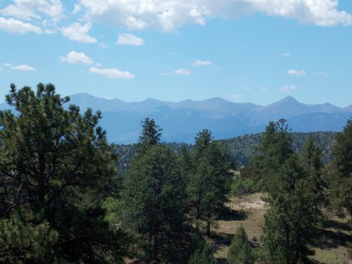 235813 - A Nice Mix Of Trees And Op : Cotopaxi : Fremont County : Colorado