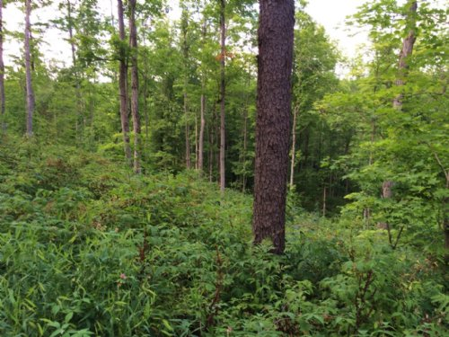 150 Acres Timberland Borders Forest : Birdsall : Allegany County : New York