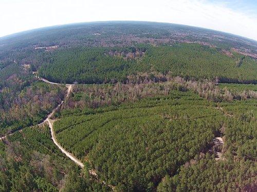 24 Acres Fm 942 : Camden : Polk County : Texas