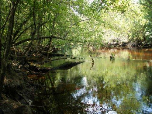 Little Pee Dee River : Dillon : South Carolina