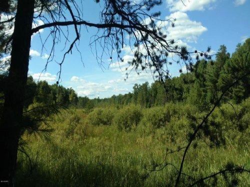 Picturesque 22 Acre Property : Baldwin : Lake County : Michigan