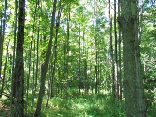 40 Acres Bordering State Forest : German : Chenango County : New York