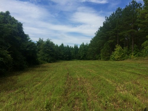 11 +/- Acres With Good Timber Value : Banks : Pike County : Alabama