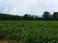 77+/- Acres Cropland : Sylacauga : Talladega County : Alabama