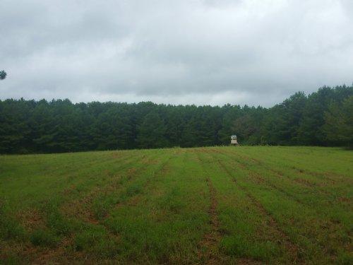 74+/- Ac Timberland On Coleman Rd : Sylacauga : Talladega County : Alabama