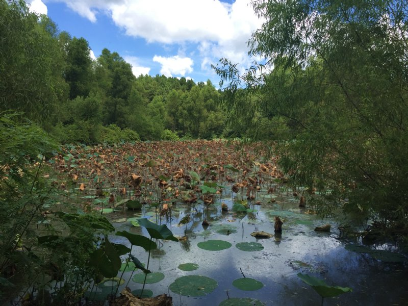 340 Acre Duck Lease On Big Creek : Marvell : Phillips County : Arkansas