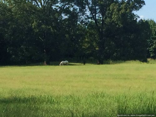 80+/- Ac Horse Property : Flora : Madison County : Mississippi