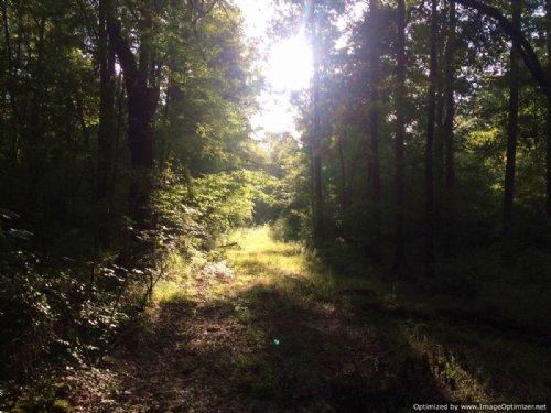 40± Acres : Lena : Leake County : Mississippi