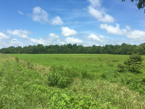 35 Acres +/- Black River : McDougal : Clay County : Arkansas