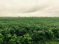 65 Acres +/- Farmland : Blytheville : Mississippi County : Arkansas