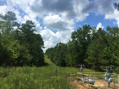 105+/- Timber Tract : Monticello : Lawrence County : Mississippi